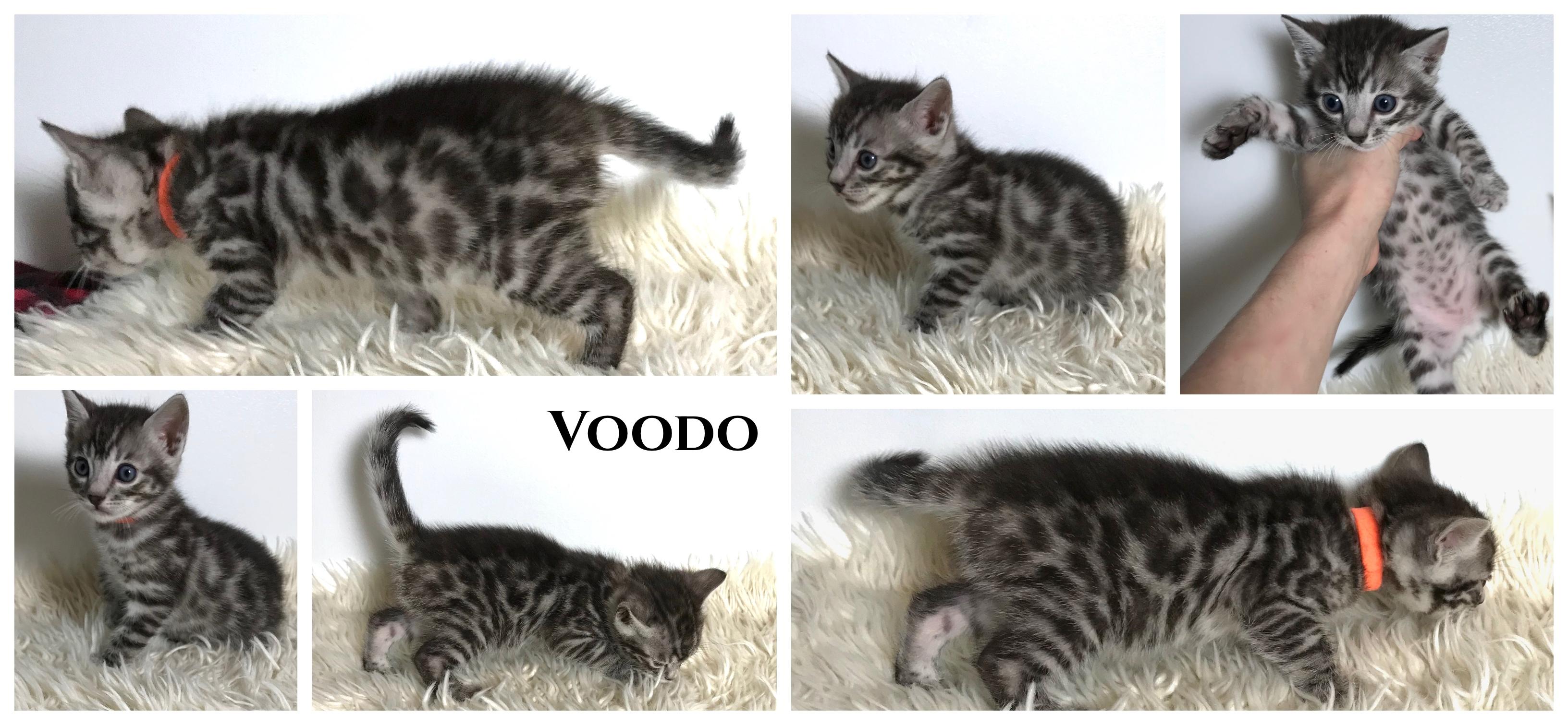 Voodo 5 weeks