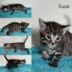 Kazak 4 weeks