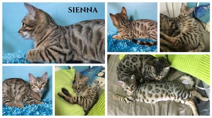 Sienna 17 weeks.jpg