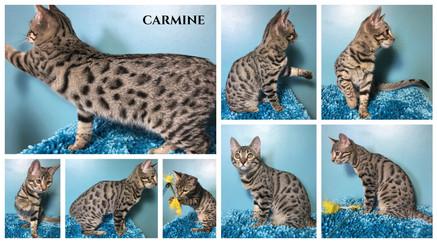 Carmine 17 weeks.jpg