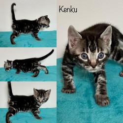 Kenku 5 weeks