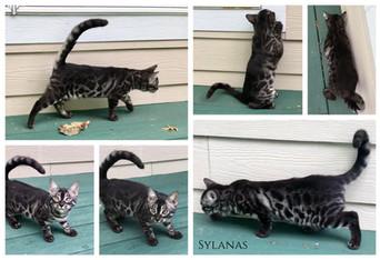 Sylanas 14 weeks.jpg