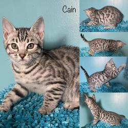 Cain 10 weeks
