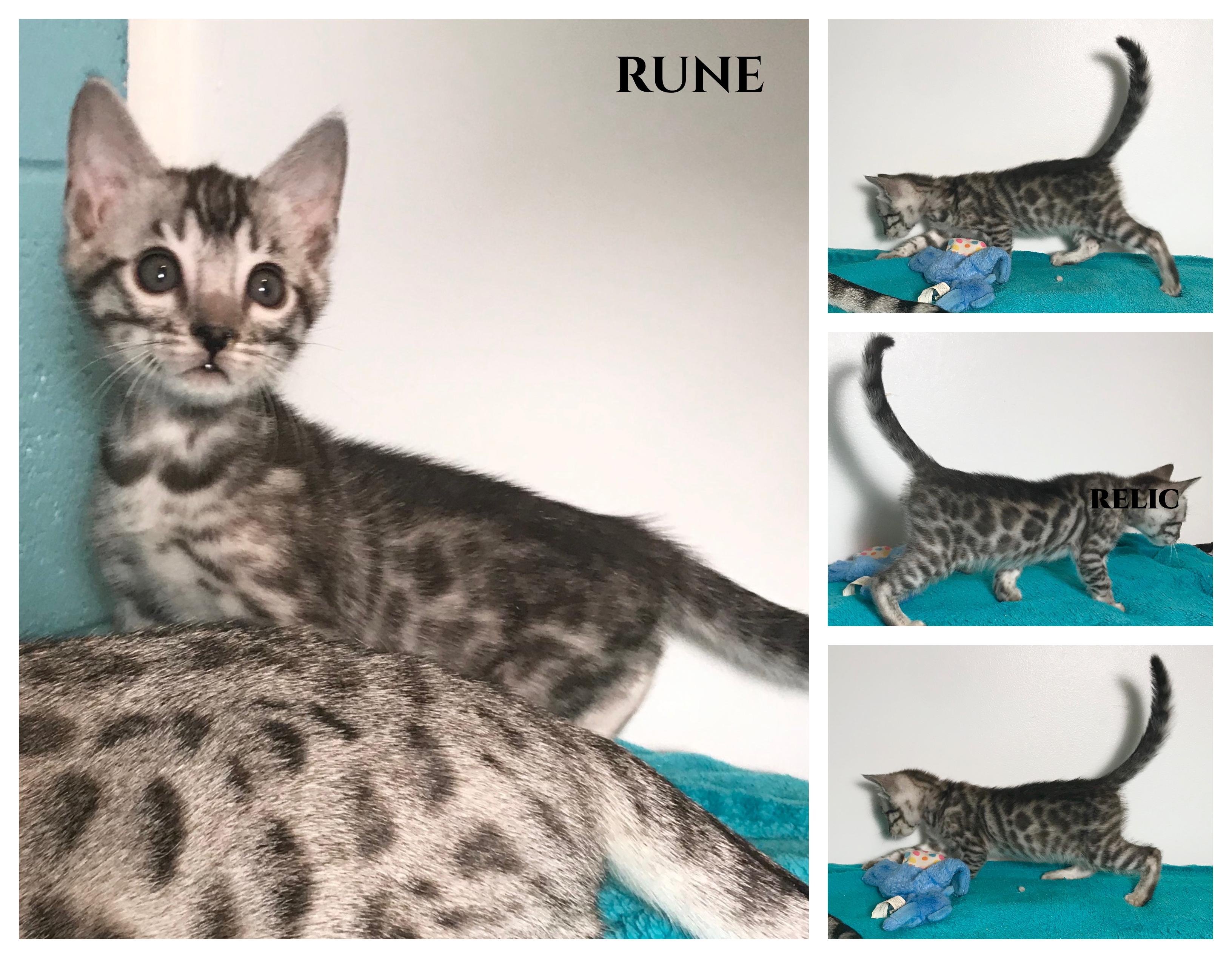 Rune 7 weeks