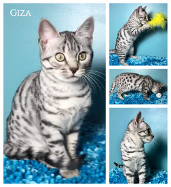 Giza aka Luna