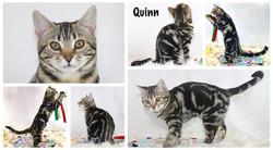 Quinn 17 weeks