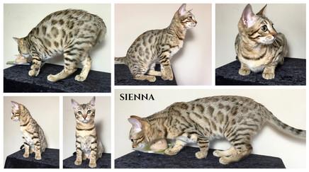 Sienna 22 weeks.jpg