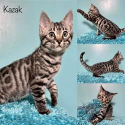 Kazak 11 weeks