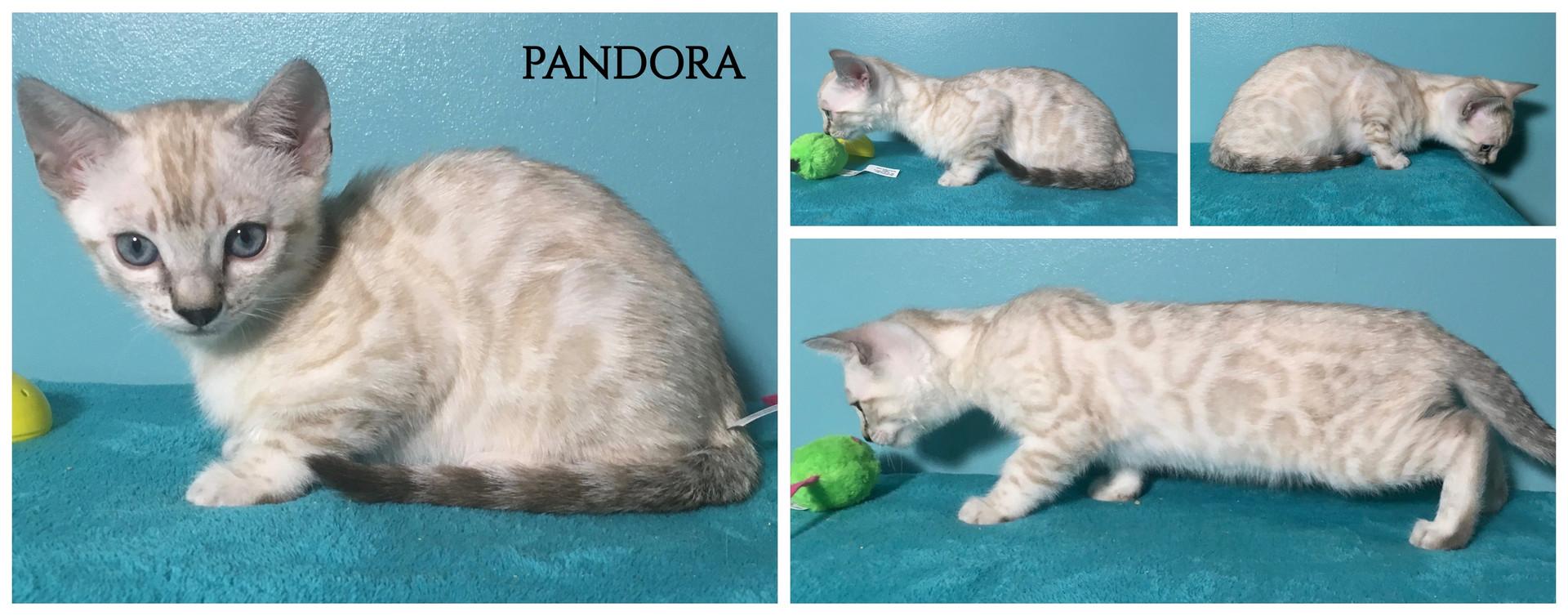 Pandora 9 weeks.jpg