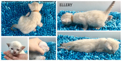 Ellery 3 weeks