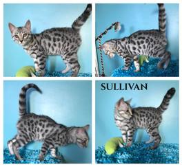Sullivan 15 weeks.jpg