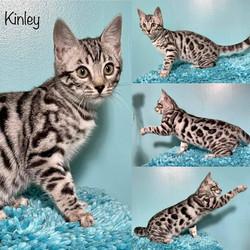 Kinley 12 weeks