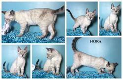 Nora 16 weeks