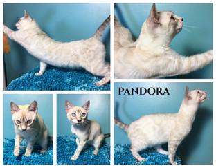 Pandora 19 weeks.jpg