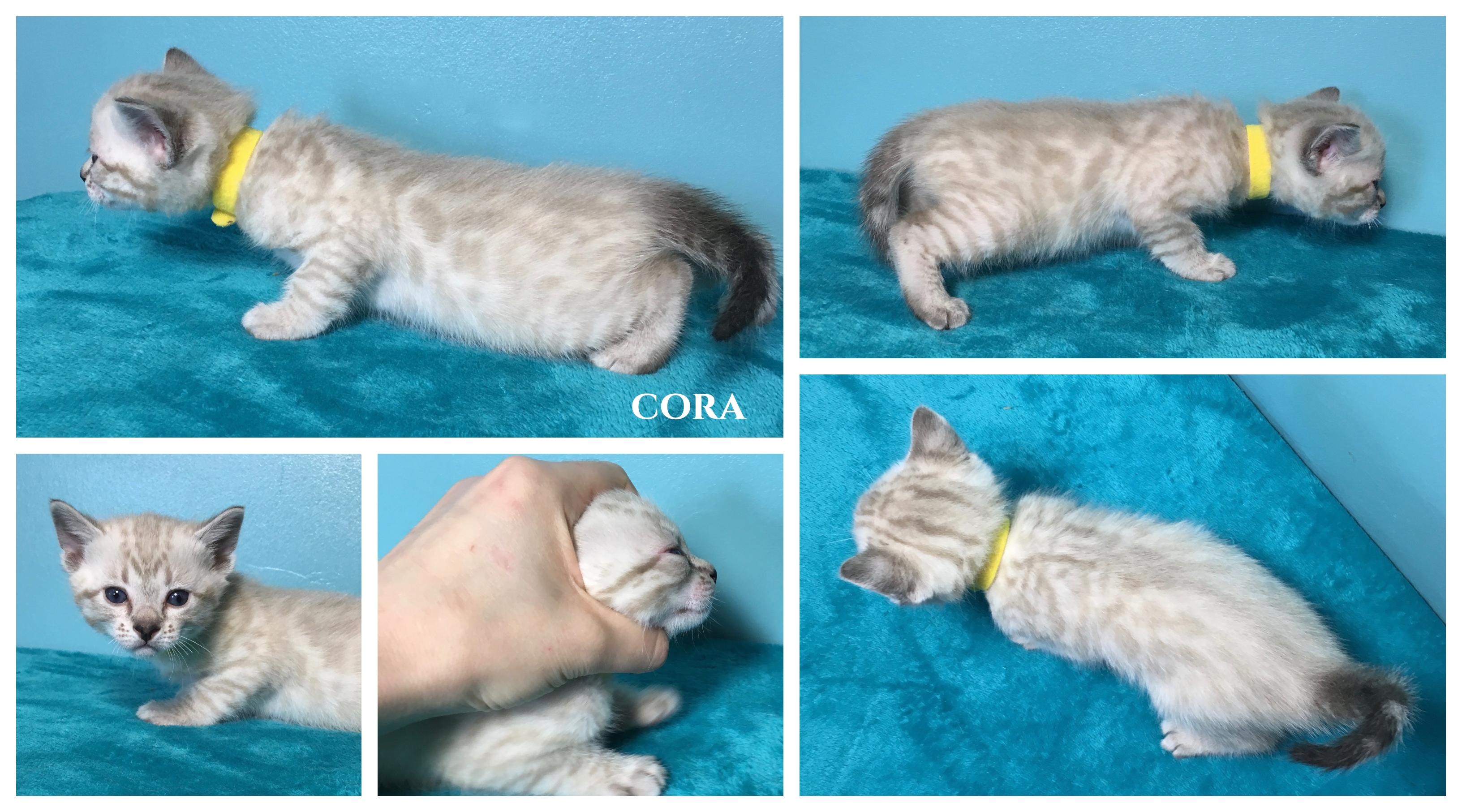 Cora 4 weeks