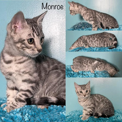 Monroe 10 weeks