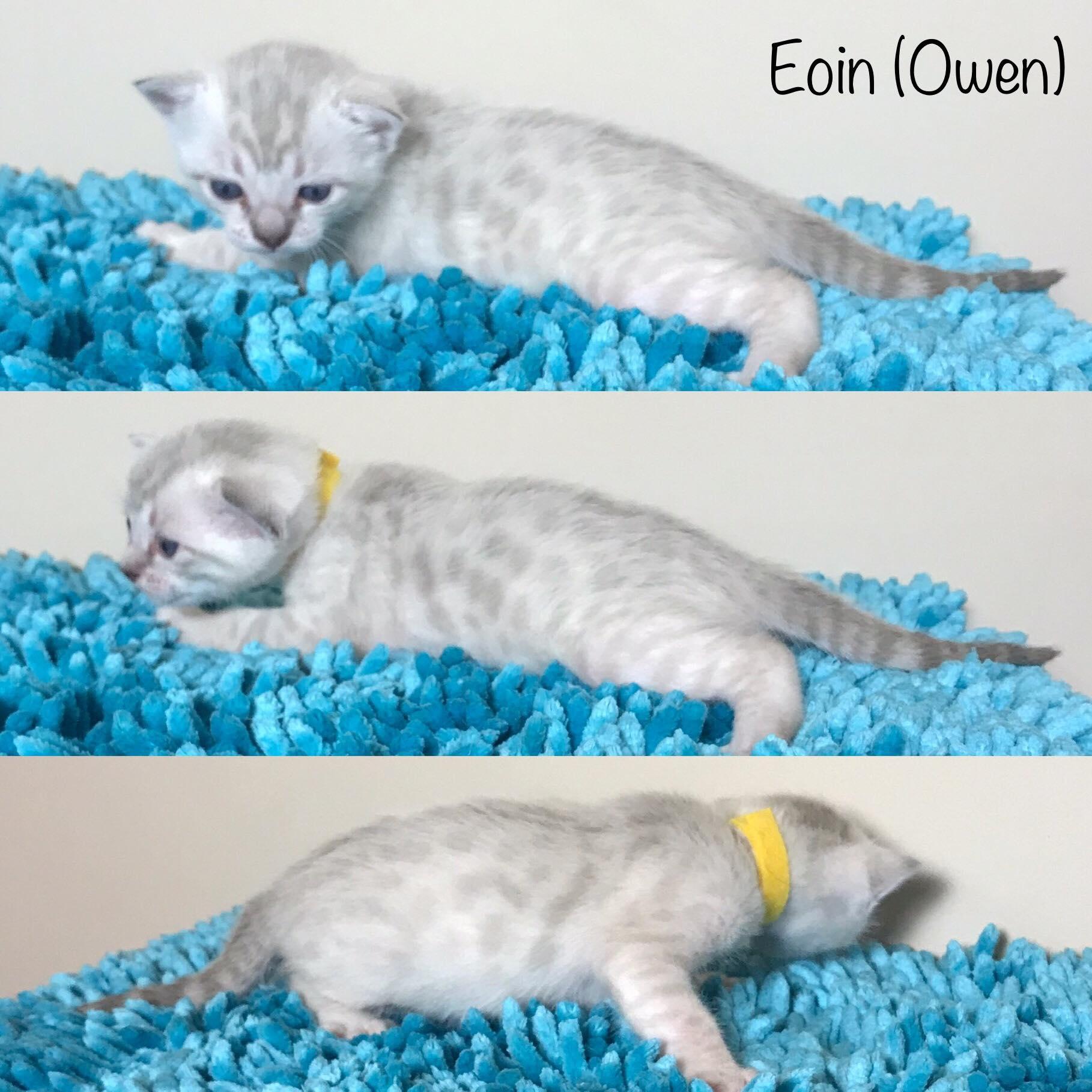 Eoin 3 weeks