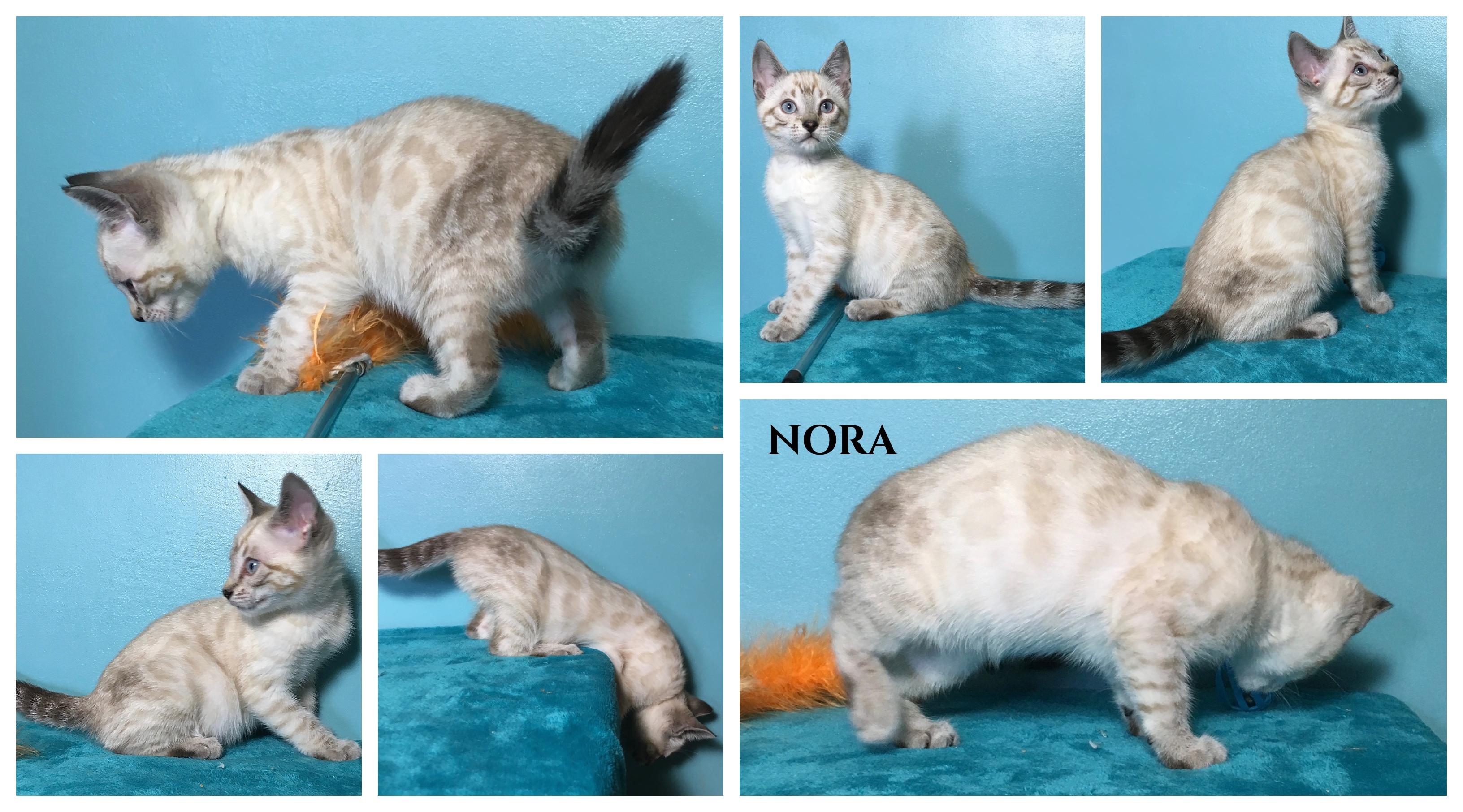 Nora 11 weeks