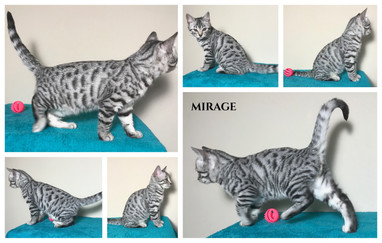 Mirage 11 weeks.jpg