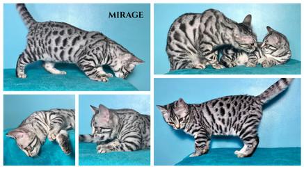 Mirage 13 weeks.jpg