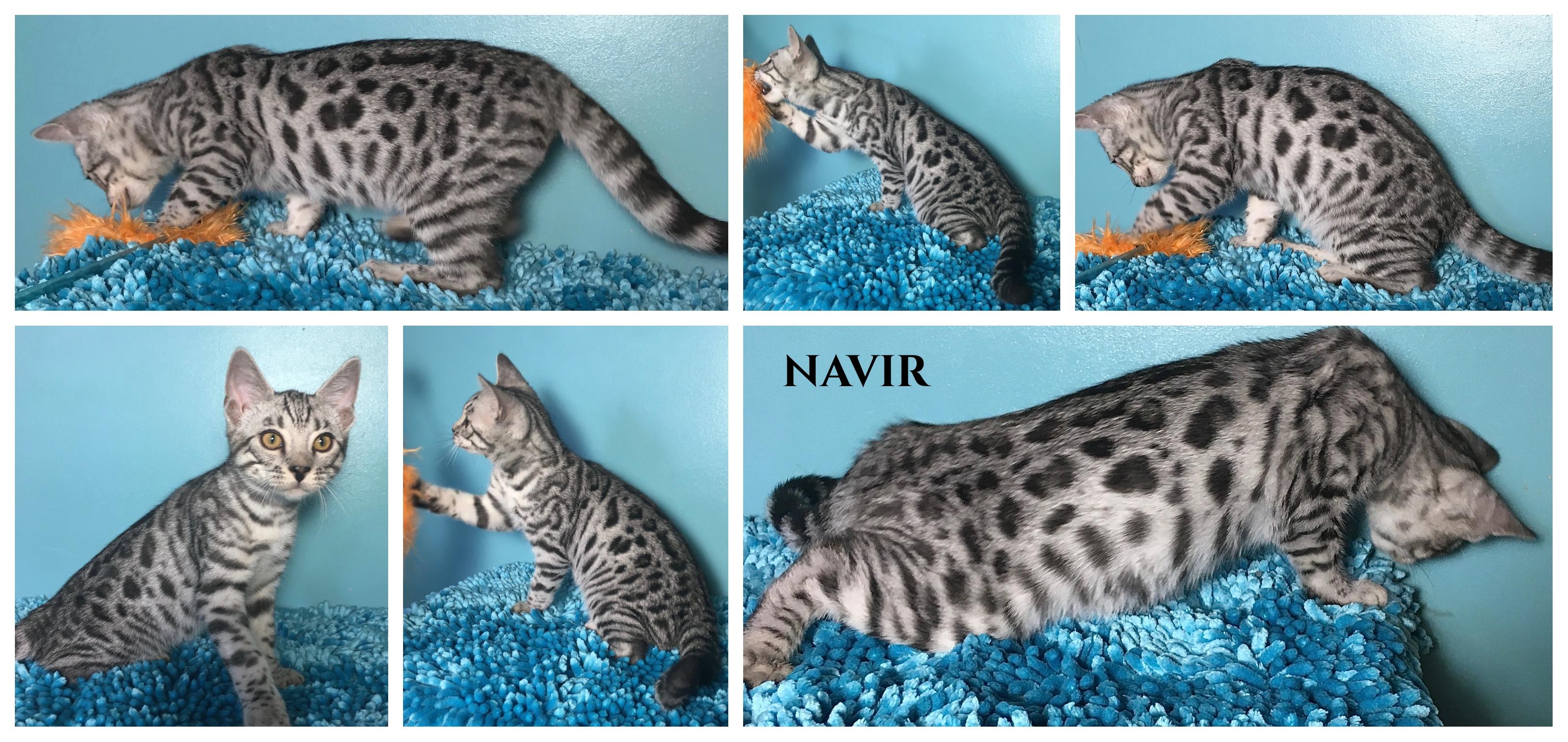 Navir 13 weeks