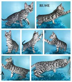 Rune 13 weeks