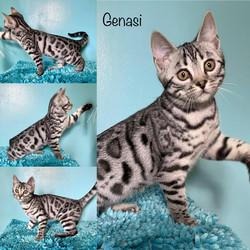 Genasi 13 weeks