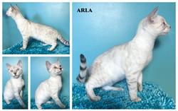 Arla 15 weeks