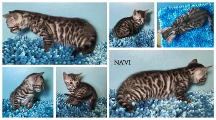 Na'vi 5 weeks.jpg