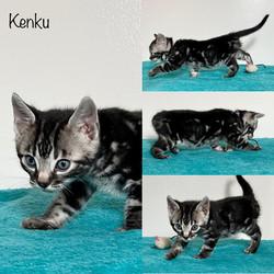 Kenku 6 weeks