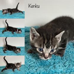 Kenku 4 weeks