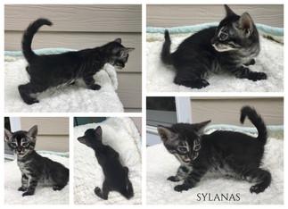 Sylanas 6 weeks.jpg