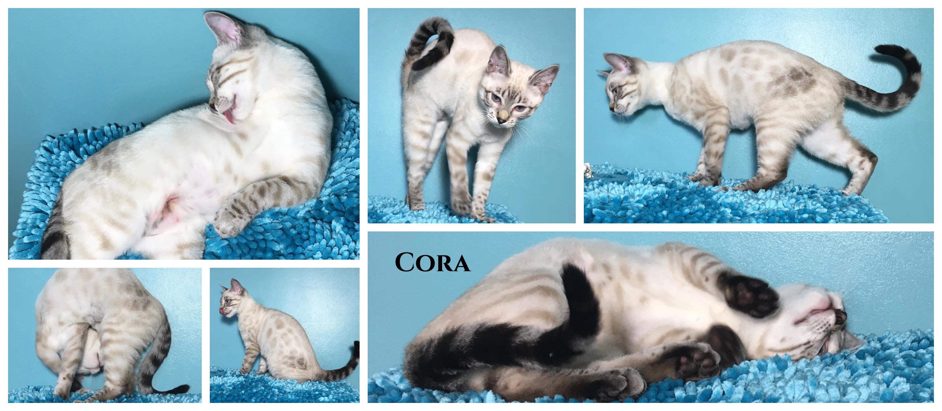 Cora 17 weeks