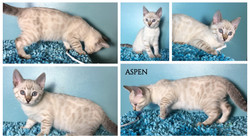 Aspen 10 weeks