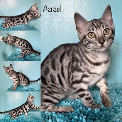 Azrael 14 weeks