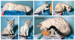Lennox 13 weeks