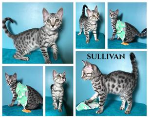 Sullivan 14 weeks.jpg