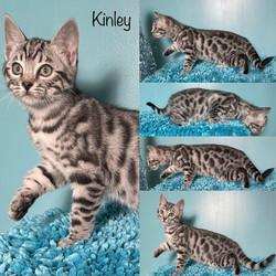 Kinley 10 weeks