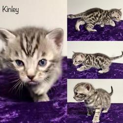Kinley 3 weeks