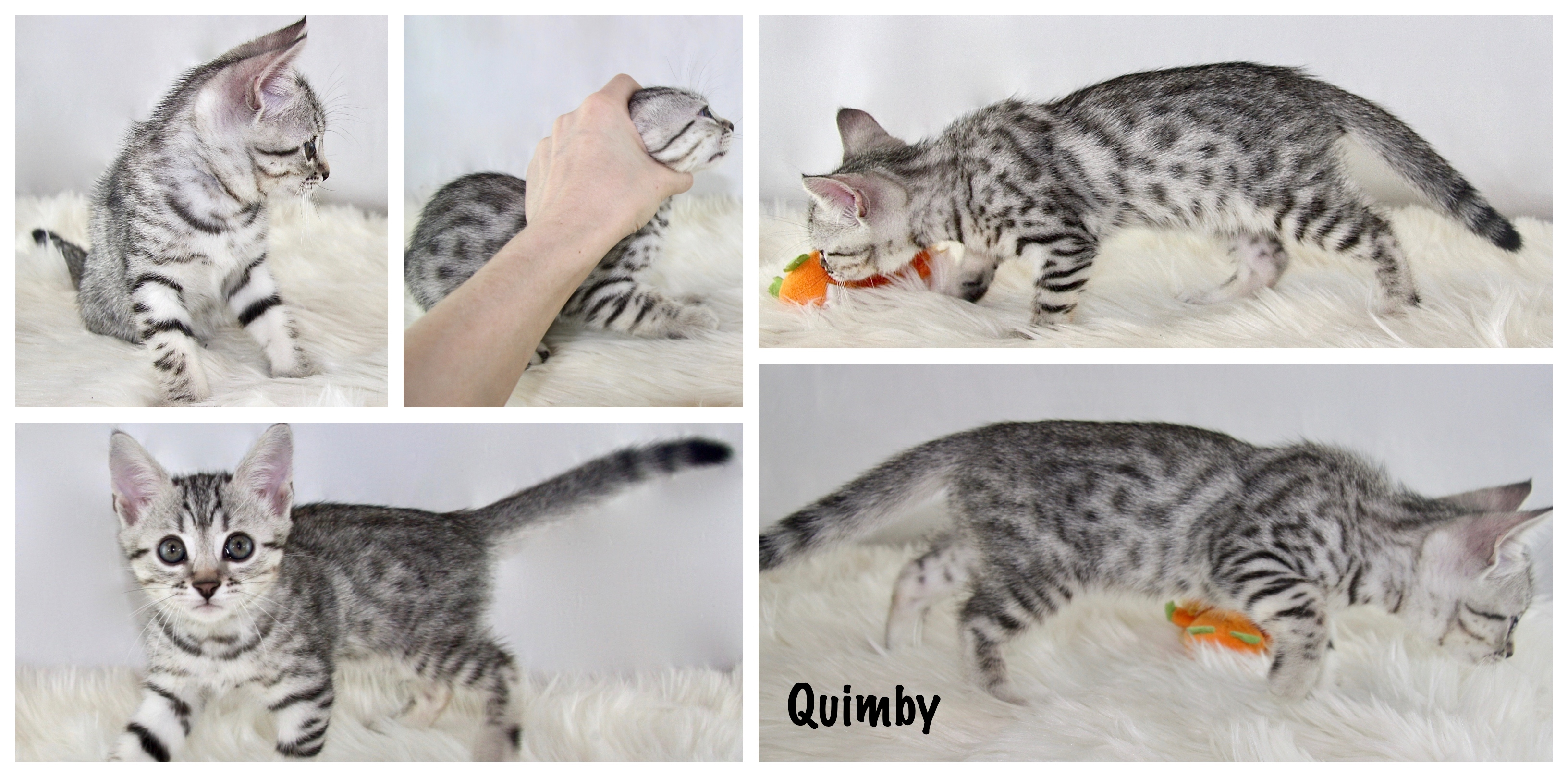 Quimby 8 weeks