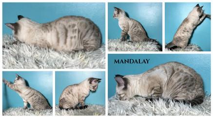 Mandalay 15 weeks.jpg