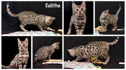 Calitha 14 weeks