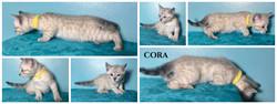 Cora 6 weeks