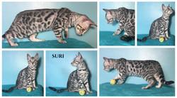 Suri 14 weeks