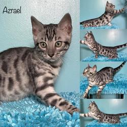 Azrael 11 weeks