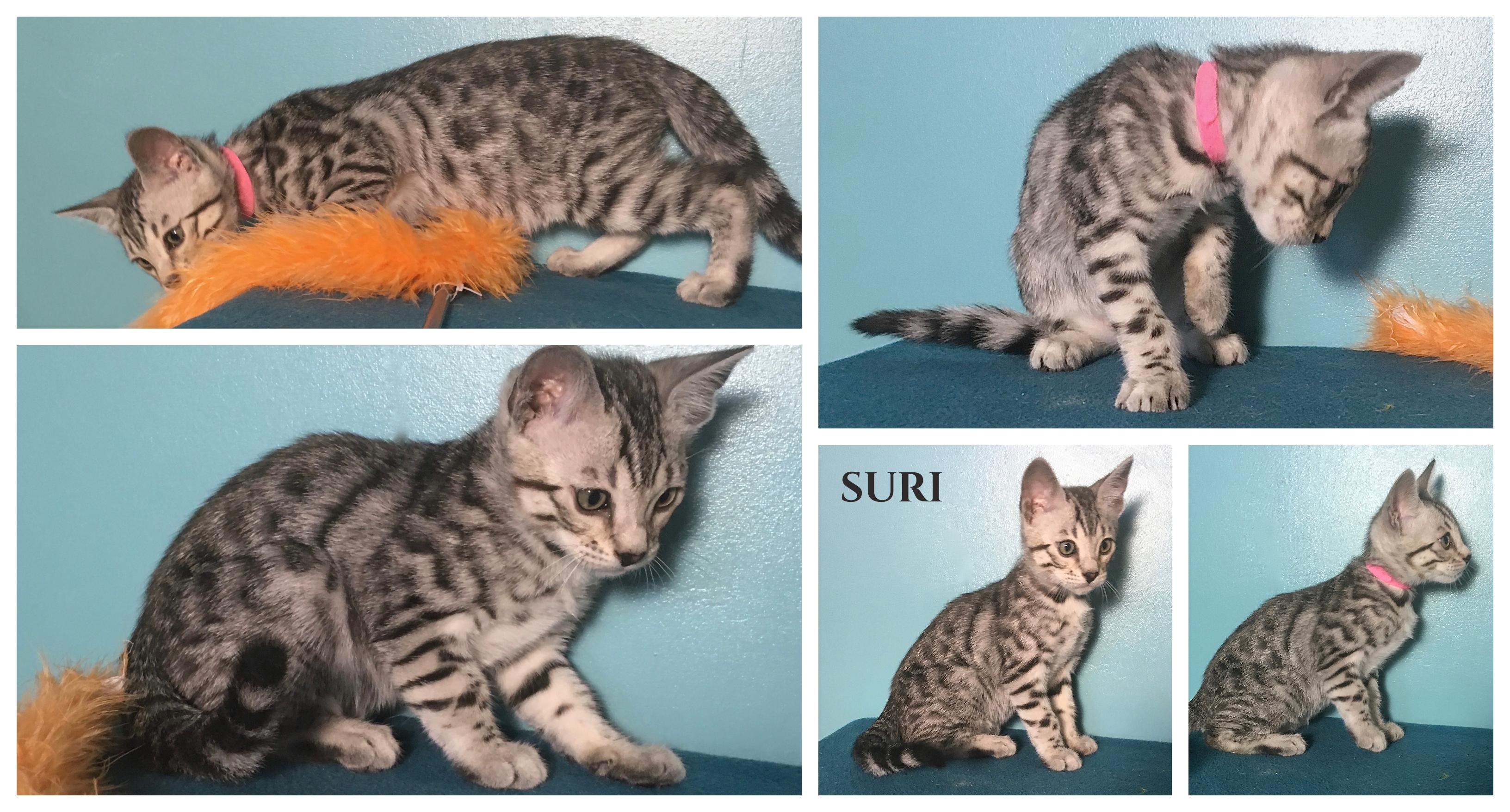 Suri 9 weeks