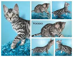 Voodo 13 weeks