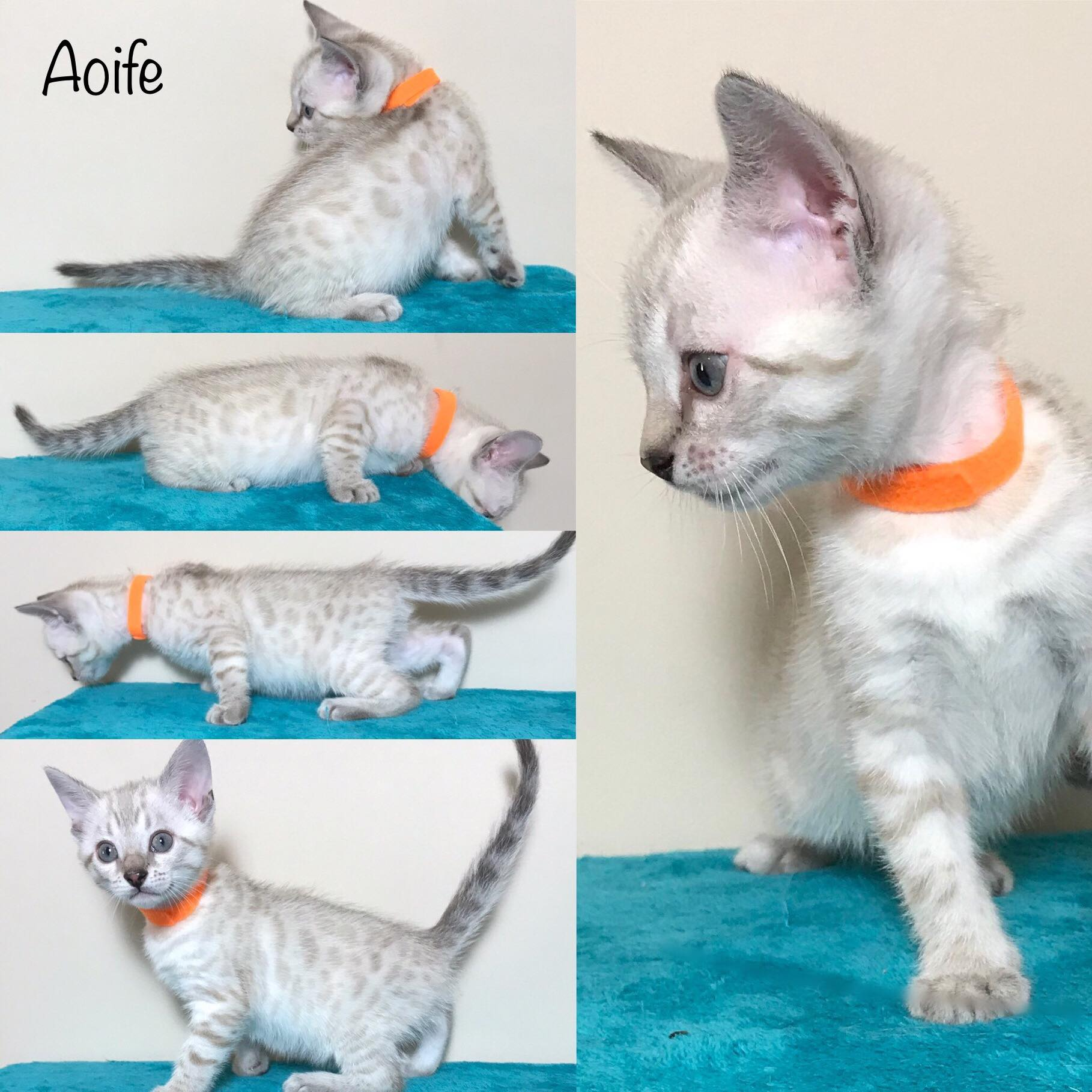 Aoife 6 weeks