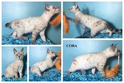 Cora 13 weeks