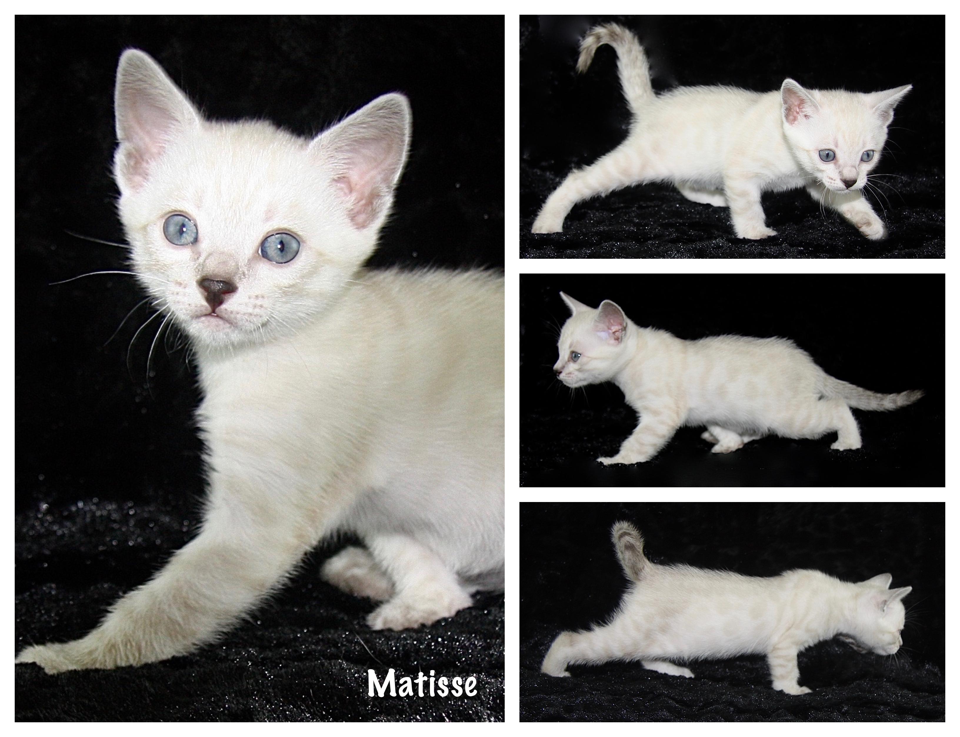 Matisse 6 weeks